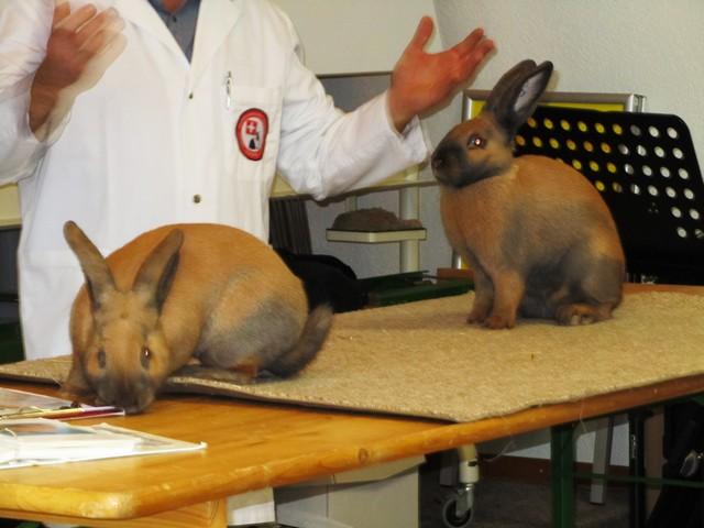14-12-30-Tierbesprechung-Hettiswil-00023